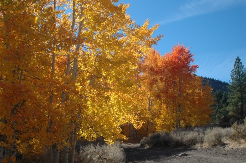 Fall color at Thomas Creek in Washoe County, Nevada, NV
