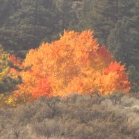 Fall photo hikes, Washoe County trails parks, Reno, Nevada, NV