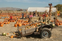 Halloween activities, events, trick or treat, Reno, Nevada, NV