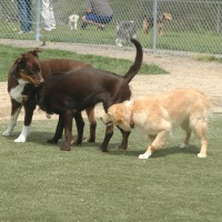 Dog parks, Reno, Sparks, Nevada, NV